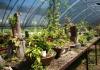 야생수목원(꽃무지풀무지)